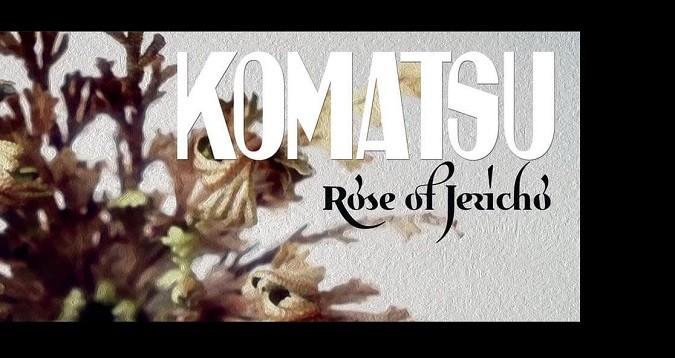 komatsu rose of jericho